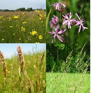 image Prairie_en_fleurs.jpg (5.2MB)